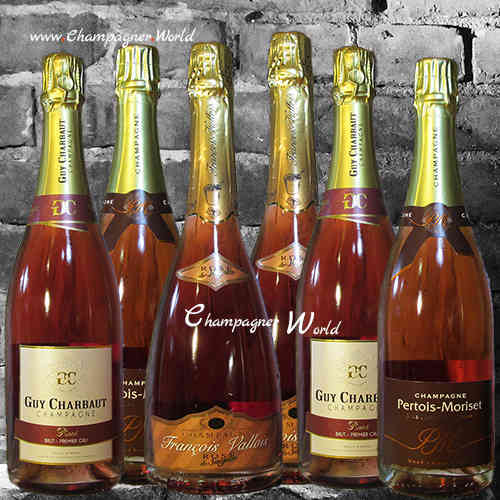Selection 6x Rose Champagner