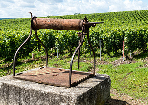 Champagne, Weinberge bei Ay | ChampagnerWorld